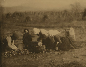 <em>The Onion Harvest</em>